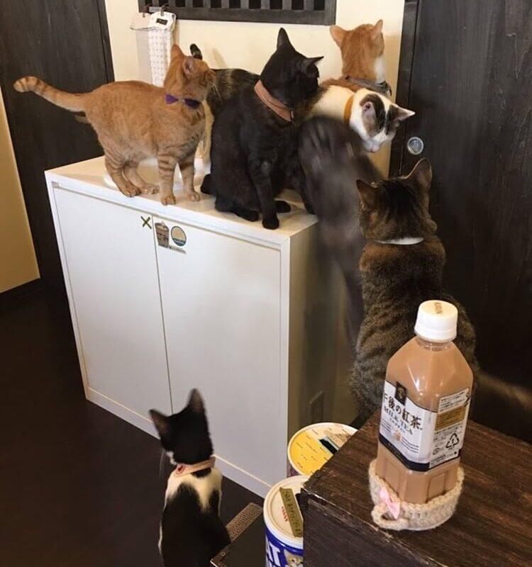 ざわつき始める猫たち