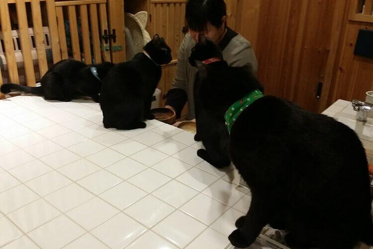 群がる黒猫たち
