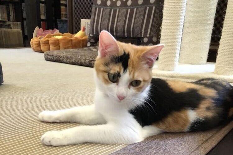子猫のアノネさん