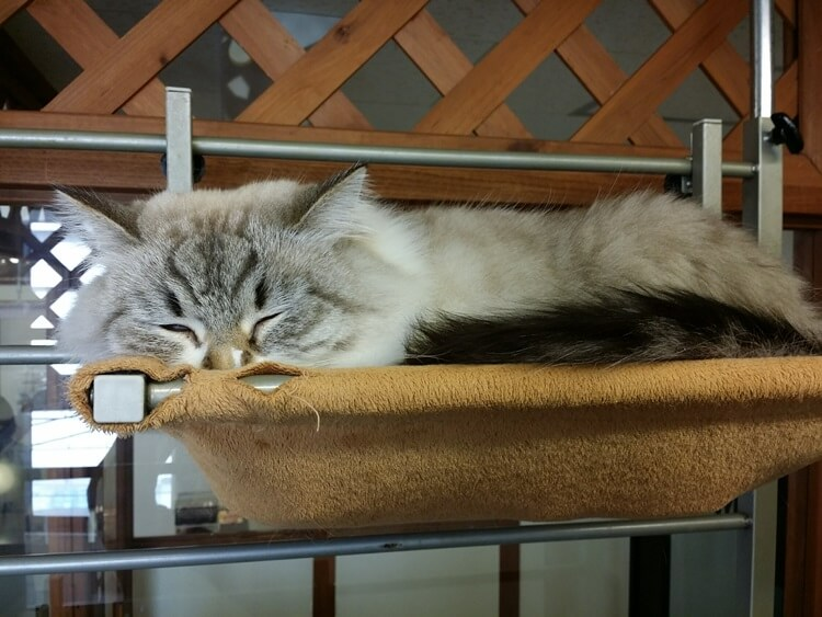 棚の上で眠る猫
