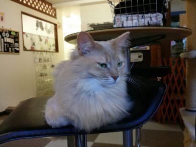 椅子の上で目を細める猫