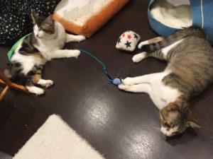 おもちゃで遊ぶ猫たち