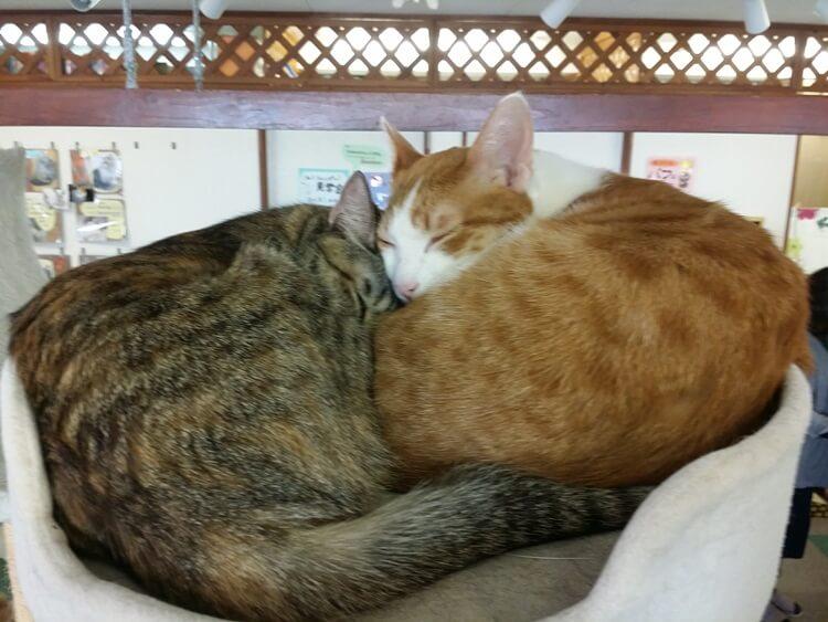 丸まり寄り添い眠る猫