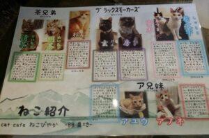 88番地猫スタッフ紹介