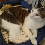 姫路の隠れ家的保護猫カフェ!ねこびやか-88番地-さんへ行ってきた!