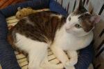 姫路の猫カフェ『cat cafe ねこびやか -88番地-』は会員制の保護猫カフェ!