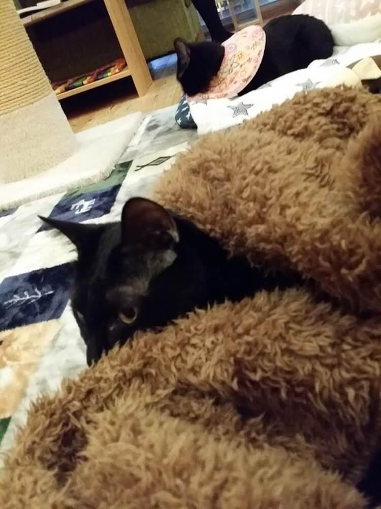 黒猫おねむタイム
