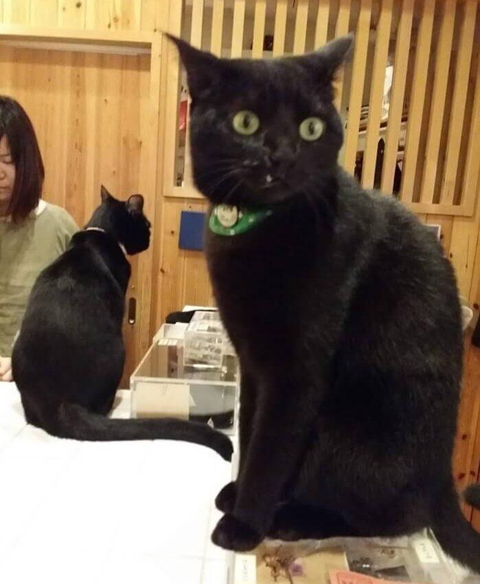 黒猫みどりさん