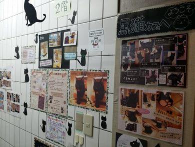 黒猫センチメール入口