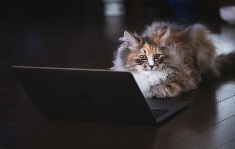 PC途中に呼び止められた猫