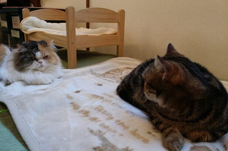睨みあう猫たち