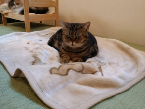 目が座る猫