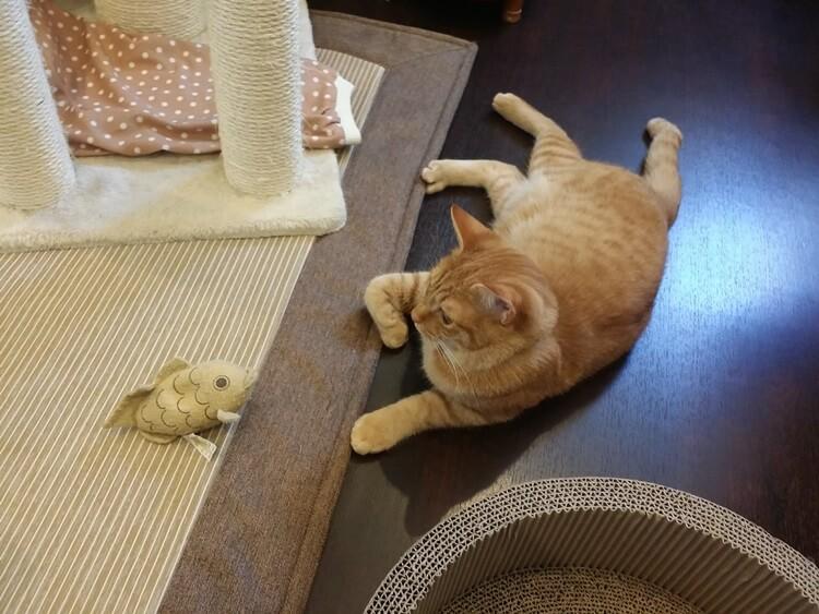魚とにらめっこ猫