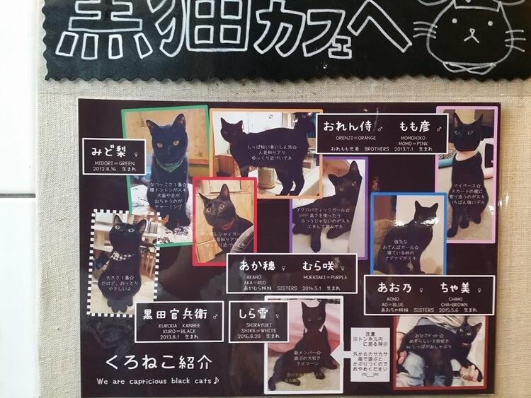 黒猫センチメートル看板