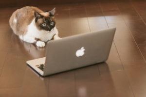 パソコンとにらめっこ猫
