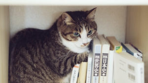 本棚大好き