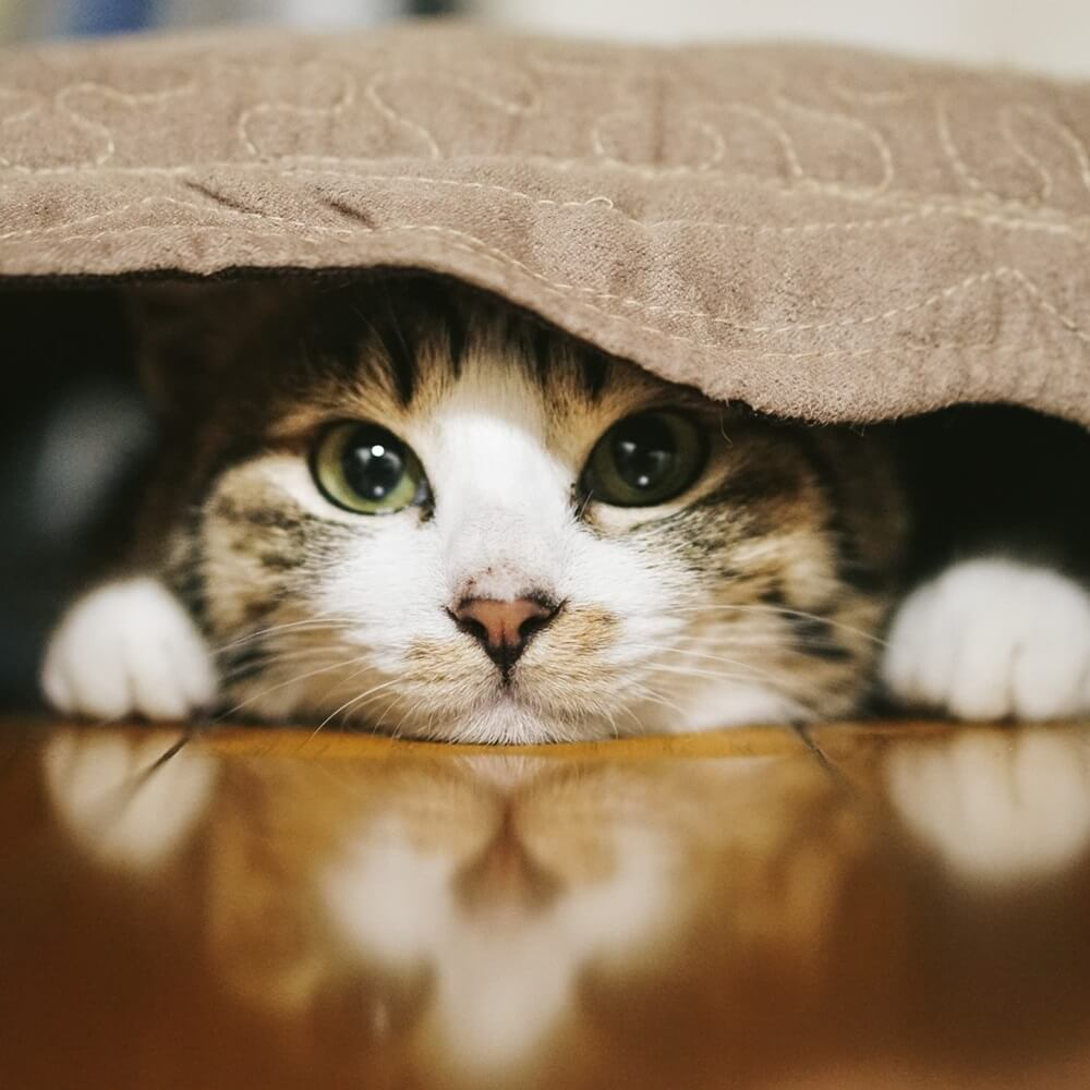 猫的生活のススメ