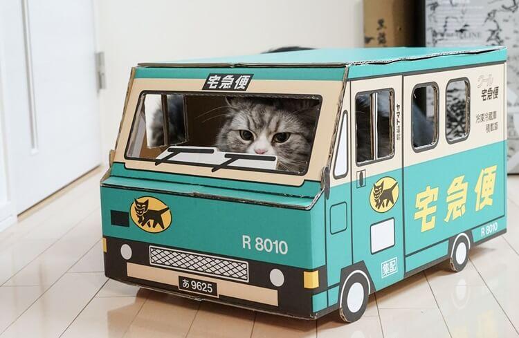 宅配する猫