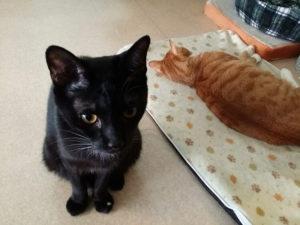 黒猫まめ吉